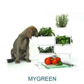 slide-mygreen